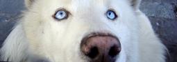 Hondennamen met een A
