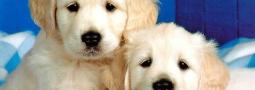 Hondennamen met een O