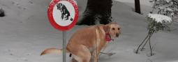 Hondennamen met een P