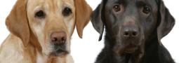 Hondennamen met een F