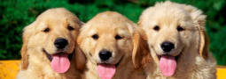 Hondennamen met een U