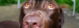 Hondennamen met een J