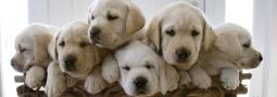 Hondennamen met een E