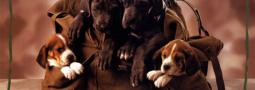 Hondennamen met een K