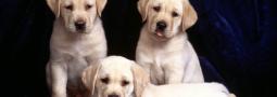 Hondennamen met een N