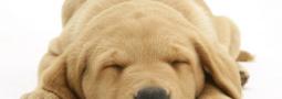 Hondennamen met een C