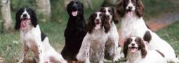 Hondennamen met een I