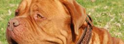 Hondennamen met een Y