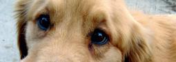 Hondennamen met een R