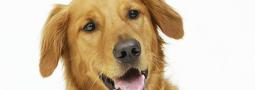 Hondennamen met een W