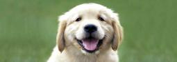 Hondennamen met een X