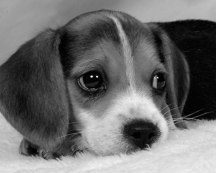 schattig_pupje